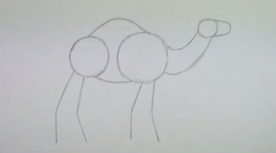 How to learn to draw an ostrich a simple pencil step by step 2