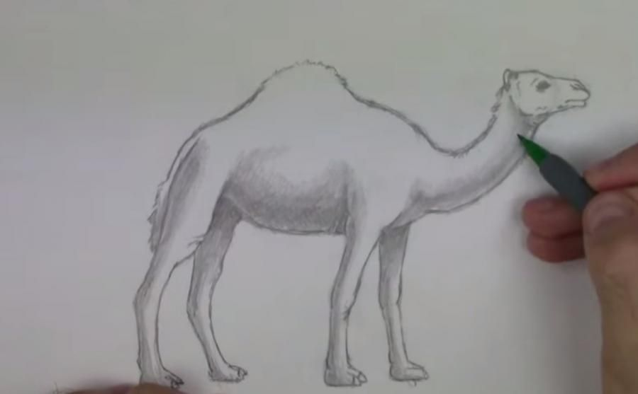 How to learn to draw an ostrich a simple pencil step by step 6