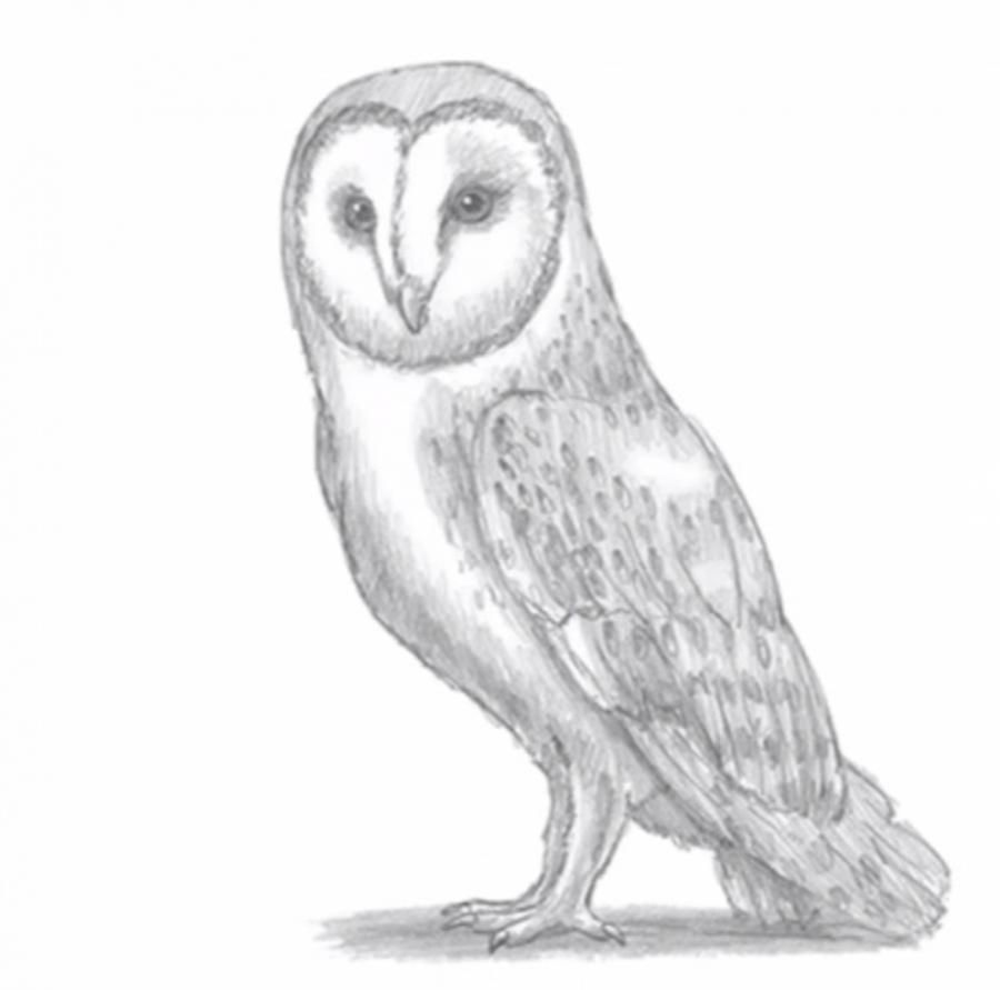 How to draw an owl with a simple pencil on paper step by step
