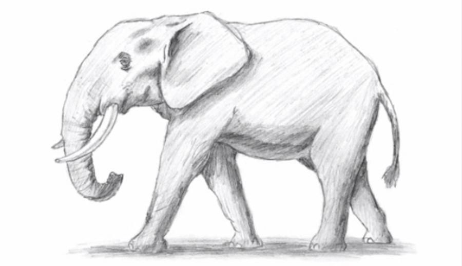 How to learn to draw an elephant a simple pencil step by step