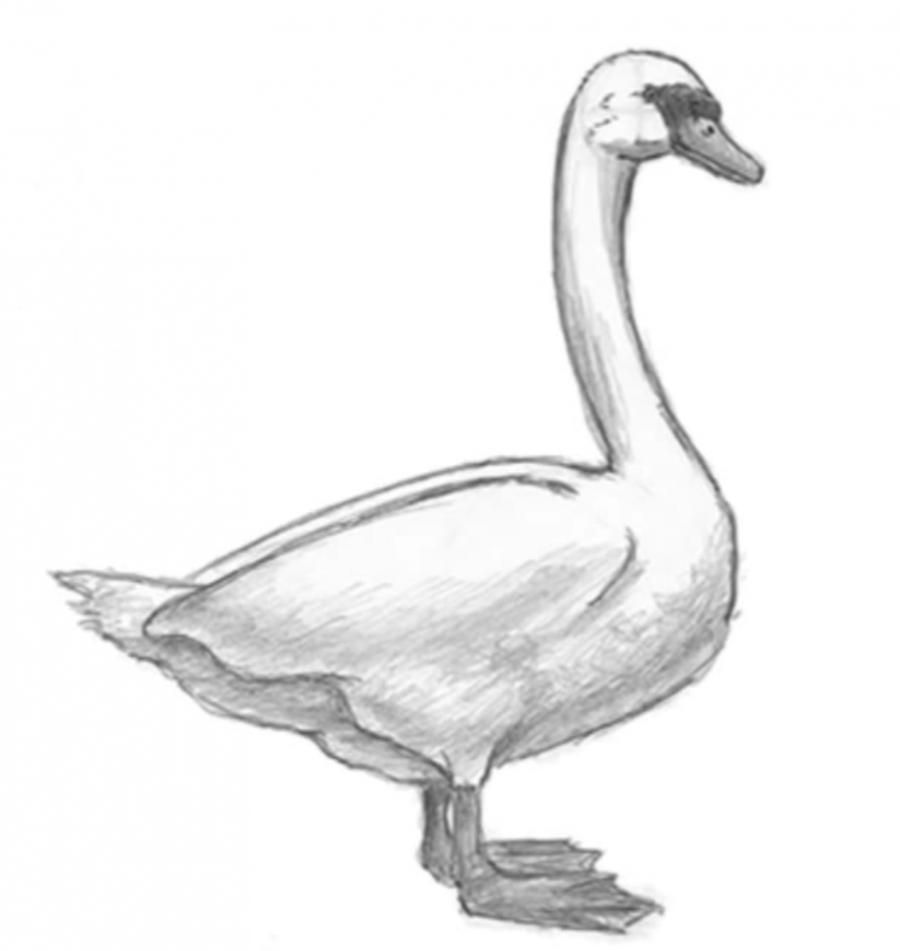 How to learn to draw a goose a simple pencil step by step