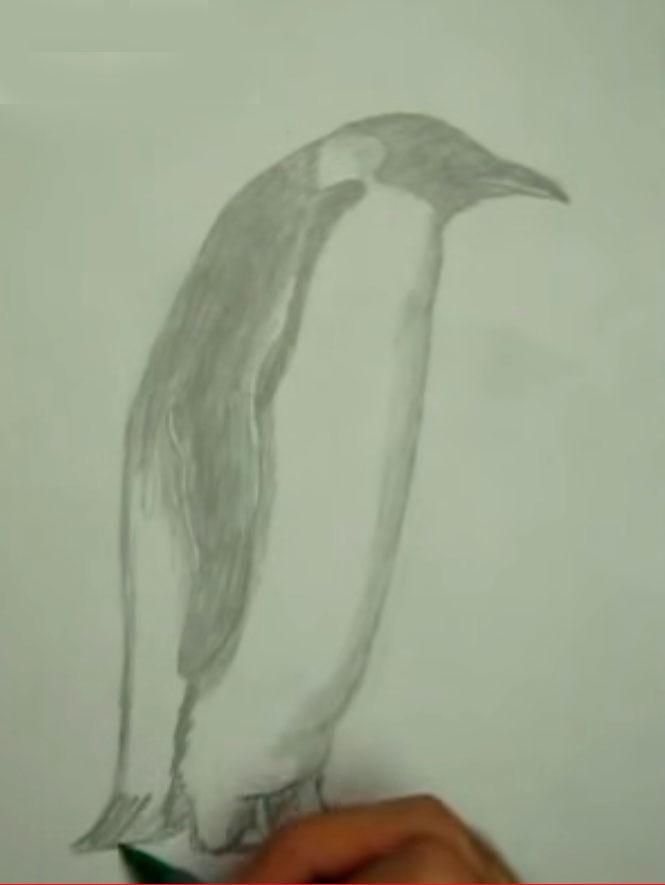 We learn to draw a crow a simple pencil step by step 5