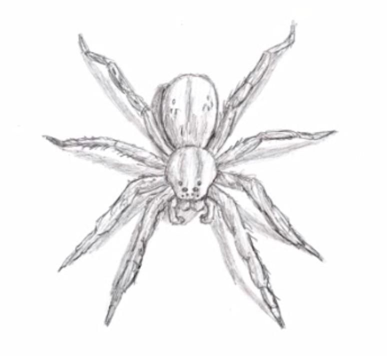 How to learn to draw a spider a simple pencil step by step