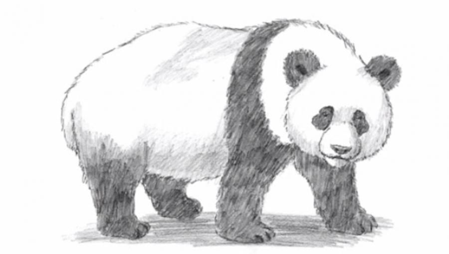 How to learn to draw a panda a simple pencil step by step