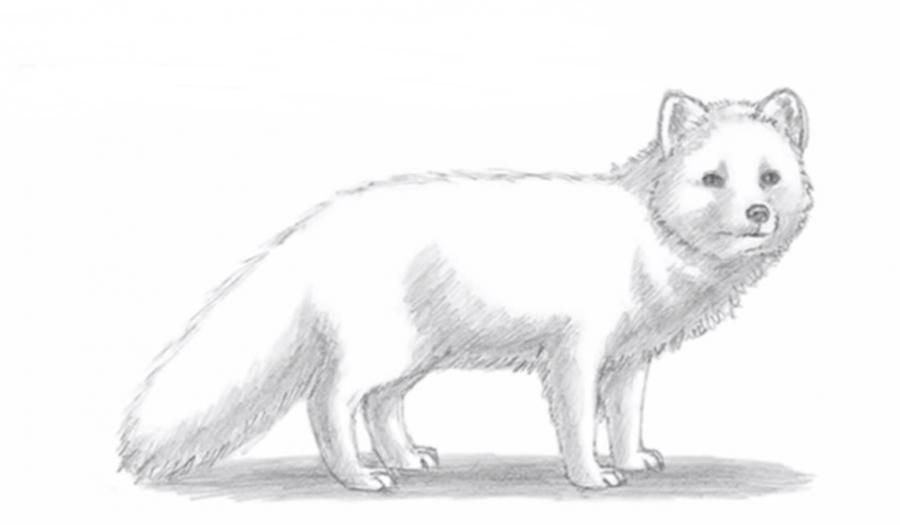 How to learn to draw a fox a simple pencil step by step