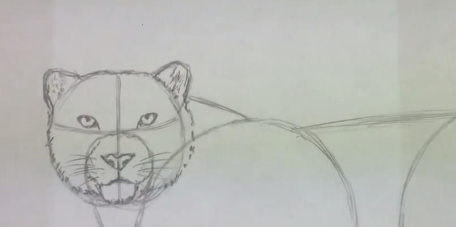 How to learn to draw a lion a simple pencil step by step 3
