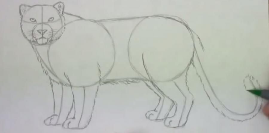 How to learn to draw a lion a simple pencil step by step 4