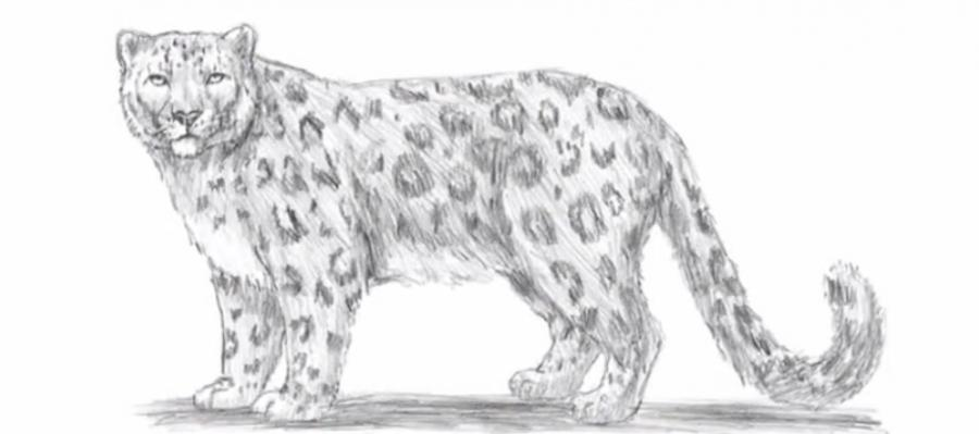 How to learn to draw a leopard a simple pencil step by step