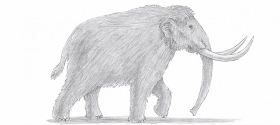 How to learn to draw a mammoth a simple pencil step by step