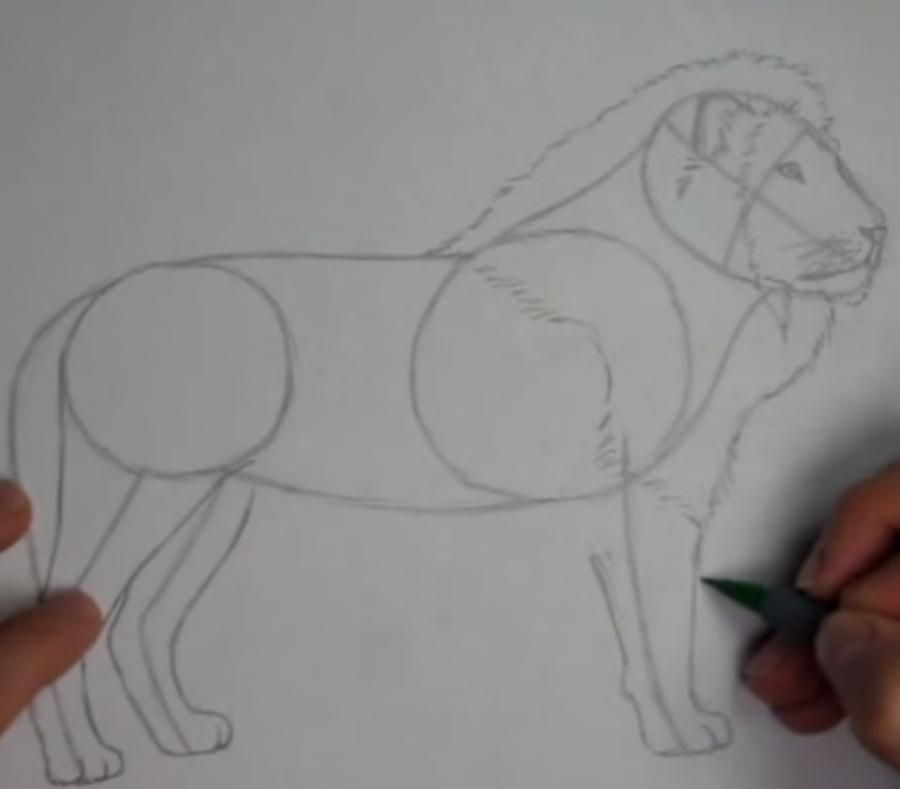 How to learn to draw a leopard a simple pencil step by step 5