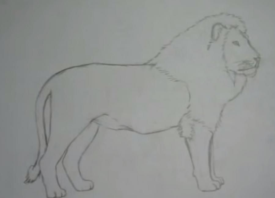 How to learn to draw a leopard a simple pencil step by step 6