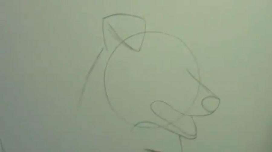 How to draw a bulldog on paper with a pencil step by step 2