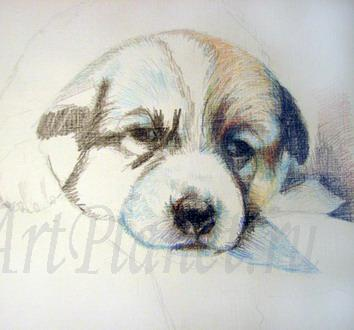How to draw Caucasian. a sheep-dog on paper a pencil 2