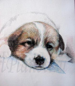 How to draw Caucasian. a sheep-dog on paper a pencil 3