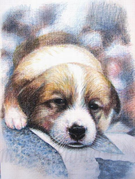 How to draw a puppy with colored pencils step by step