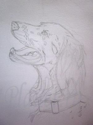 How to draw a dog of breed Huskies with a pencil step by step 2