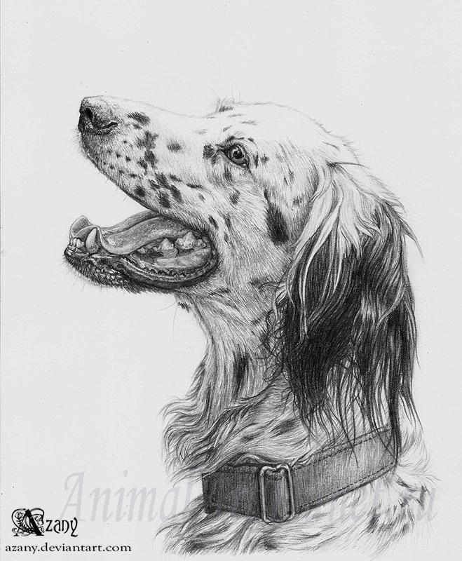 How to draw with a pencil a dog of breed the English setter