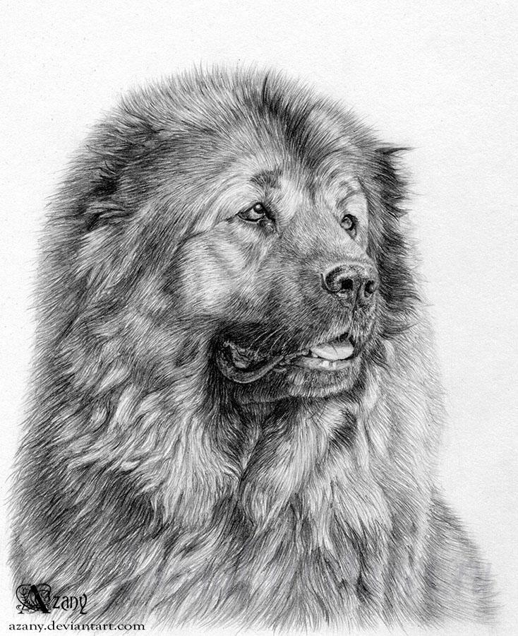 How to draw Caucasian. a sheep-dog on paper a pencil