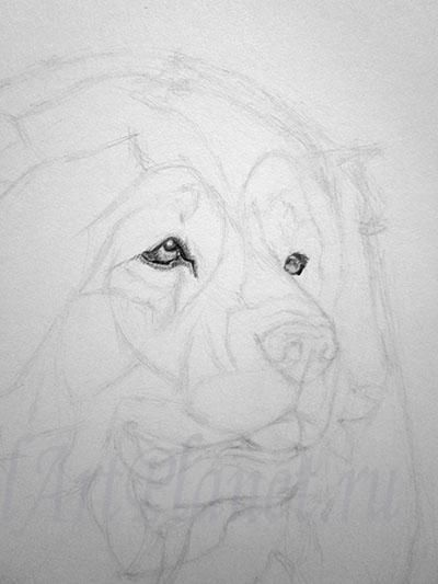 How to draw a dog of breed the Basset hound with a pencil step by step 3