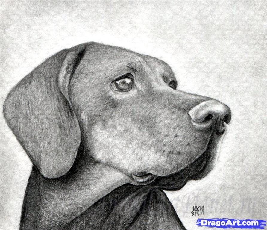 As it is correct to draw the head of a dog with a pencil