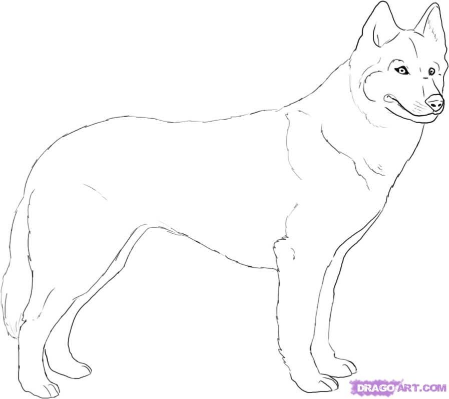 How to draw a dog of breed Huskies with a pencil step by step
