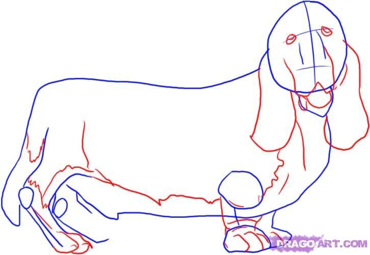 How to draw a dalmatian step by step 3
