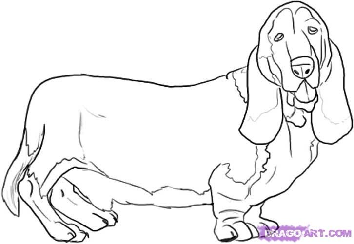 How to draw a dog of breed the Basset hound with a pencil step by step