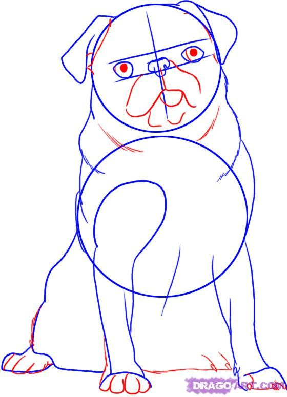 How to draw a dog of breed a Dobermann terrier step by step 4