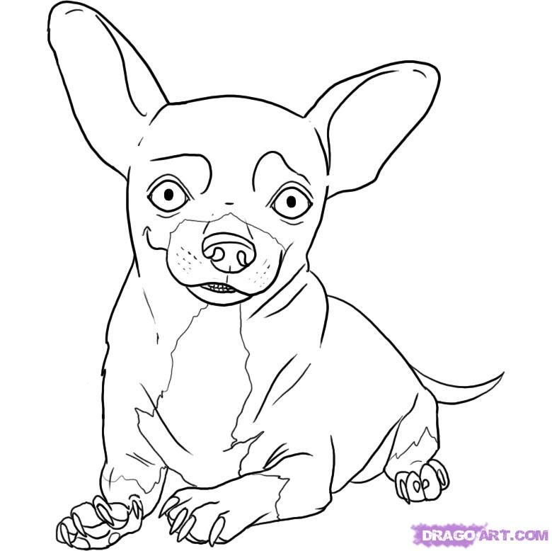 How to draw a dog of a chihuahua with a pencil step by step