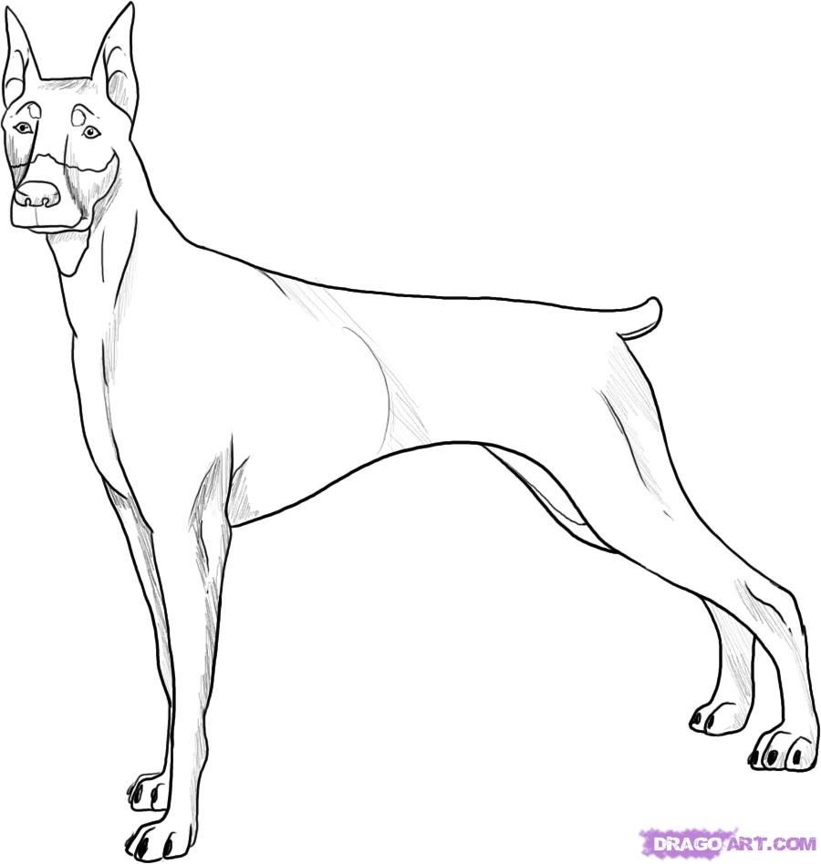 How to draw a dog of breed a Dobermann terrier step by step