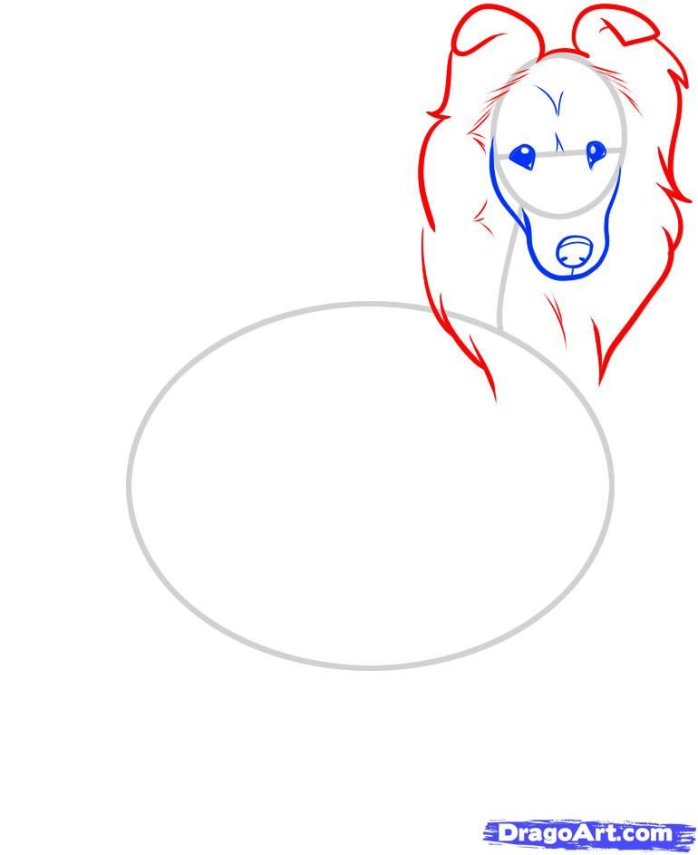 How to draw the Icelandic sheep-dog step by step 5
