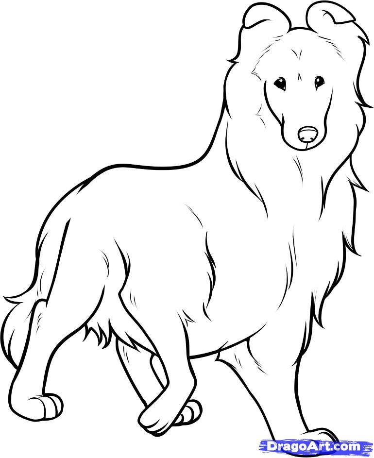 How to draw a dog of breed of the Collie step by step