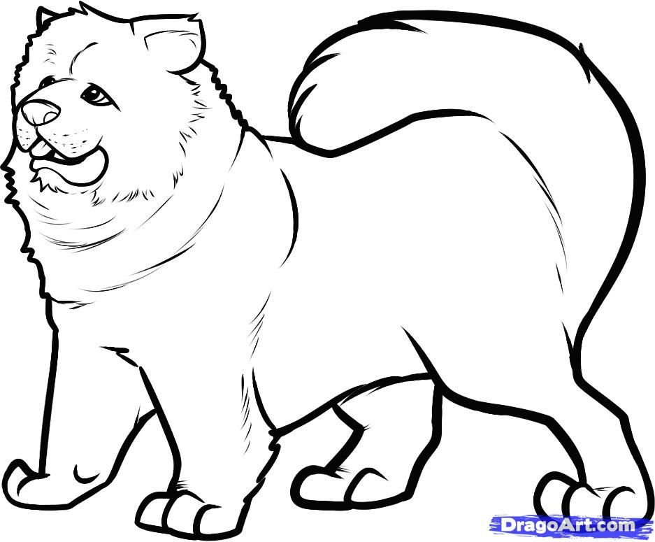 How to draw a dog of breed of a chow-chow step by step
