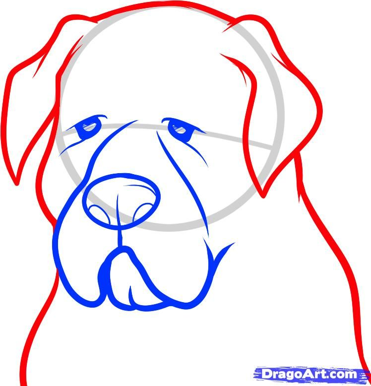 How to draw a dog on paper step by step 5