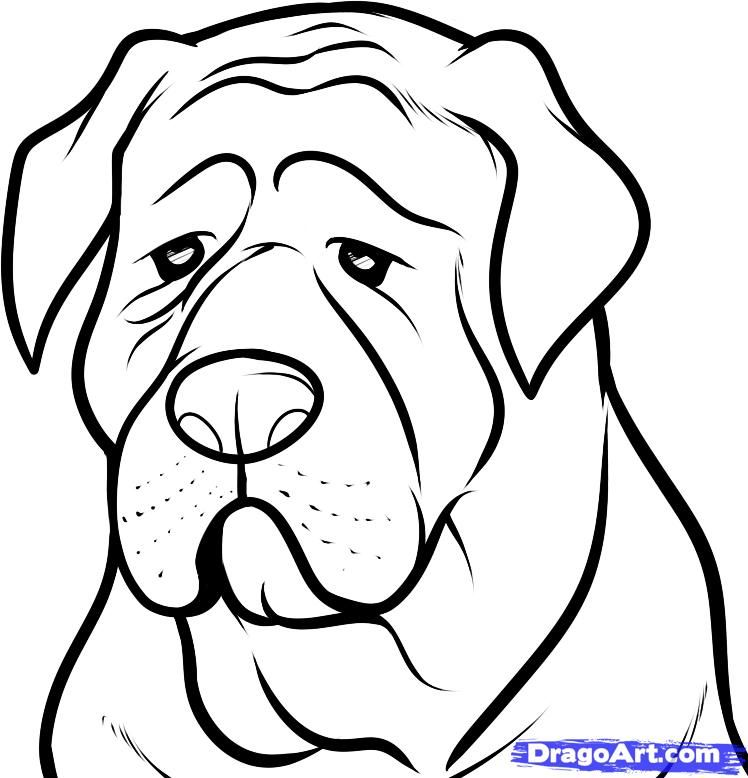 How to draw the head of a dog of breed a mastiff step by step