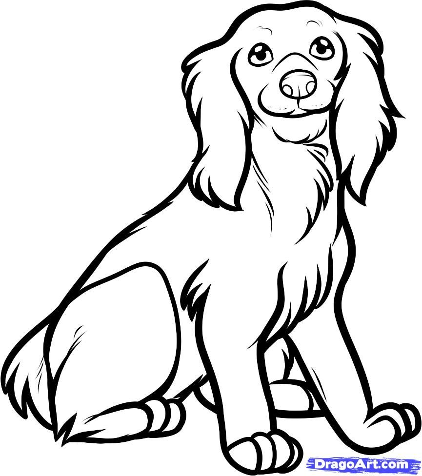 How to draw the sitting cocker spaniel step by step