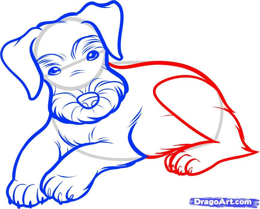 How to draw the Russian canine fleet dog with a pencil step by step 6