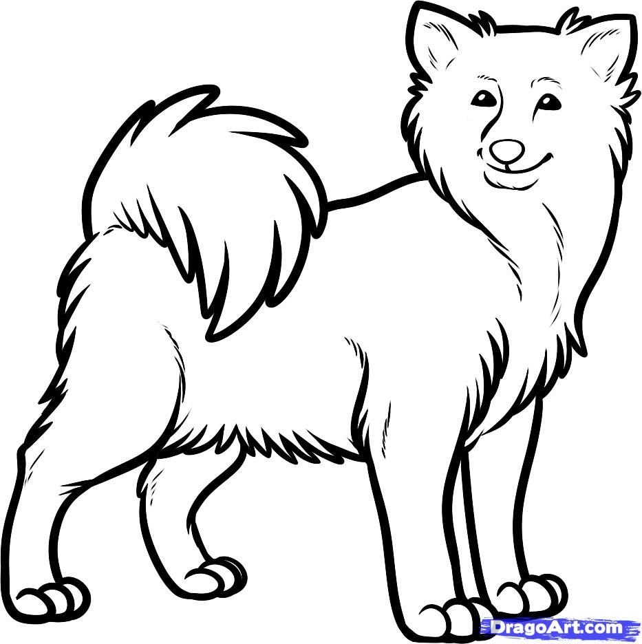 How to draw the Icelandic sheep-dog step by step