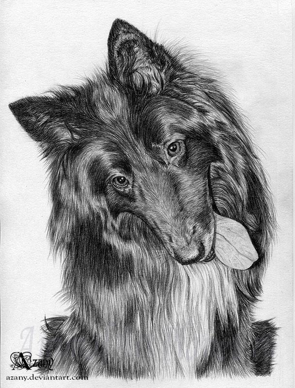 How to draw a dog of breed gryunendal with a pencil
