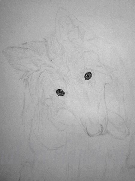 How to draw a wild African dog with a pencil step by step 3