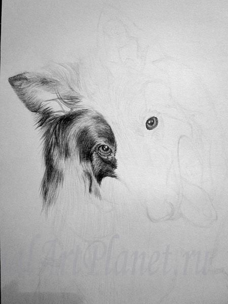 How to draw a wild African dog with a pencil step by step 4