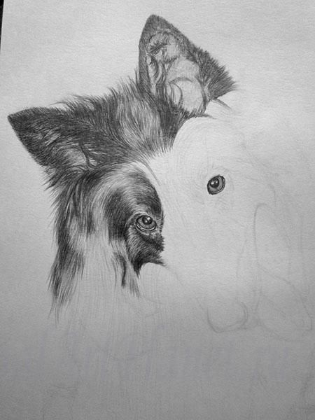 How to draw a wild African dog with a pencil step by step 5