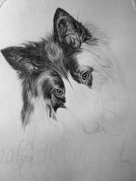 How to draw a wild African dog with a pencil step by step 6