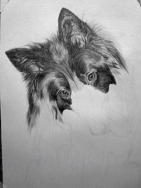 How to draw a wild African dog with a pencil step by step 7