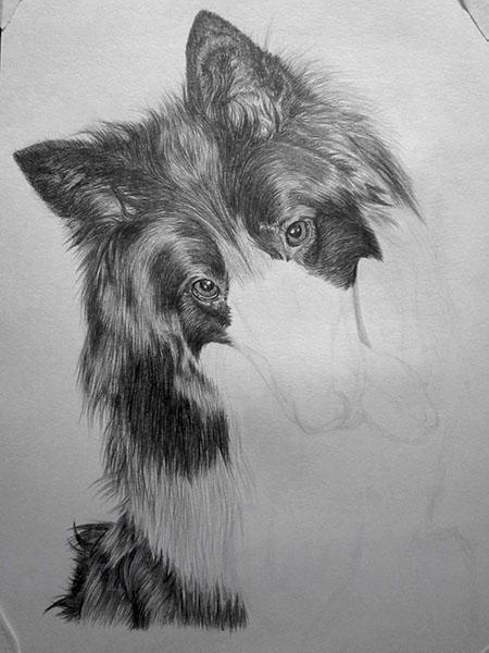 How to draw a wild African dog with a pencil step by step 8