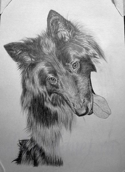 How to draw a wild African dog with a pencil step by step 10