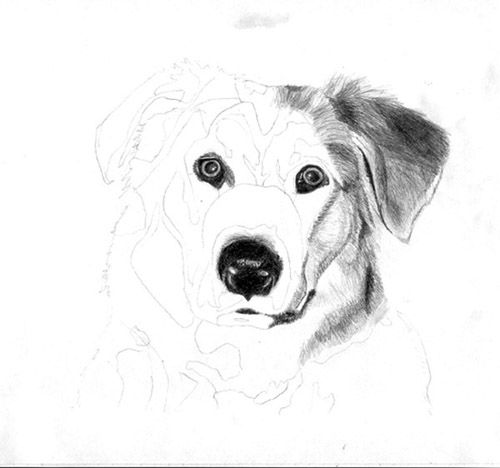 How to draw the Puppy with a pencil step by step 3