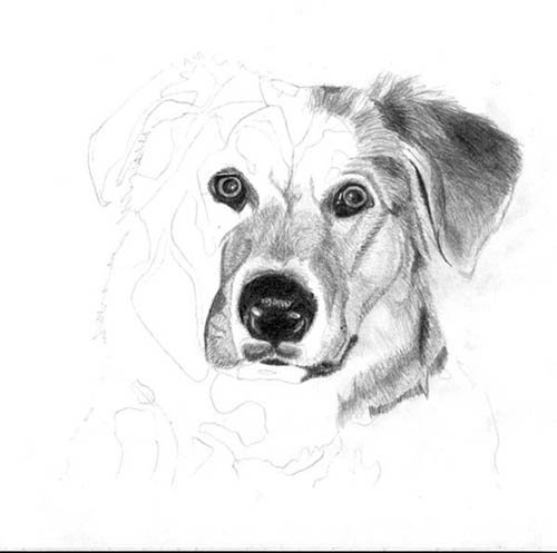 How to draw the Puppy with a pencil step by step 4