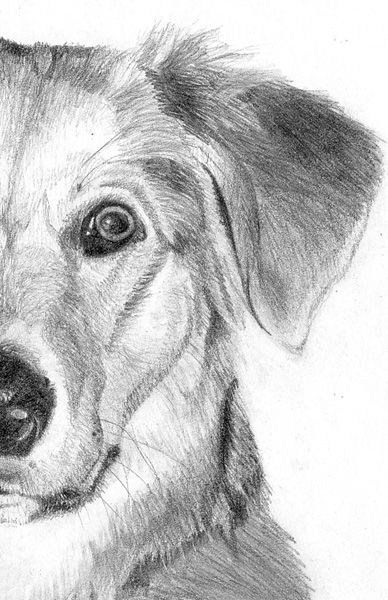 How to draw a dog on paper step by step