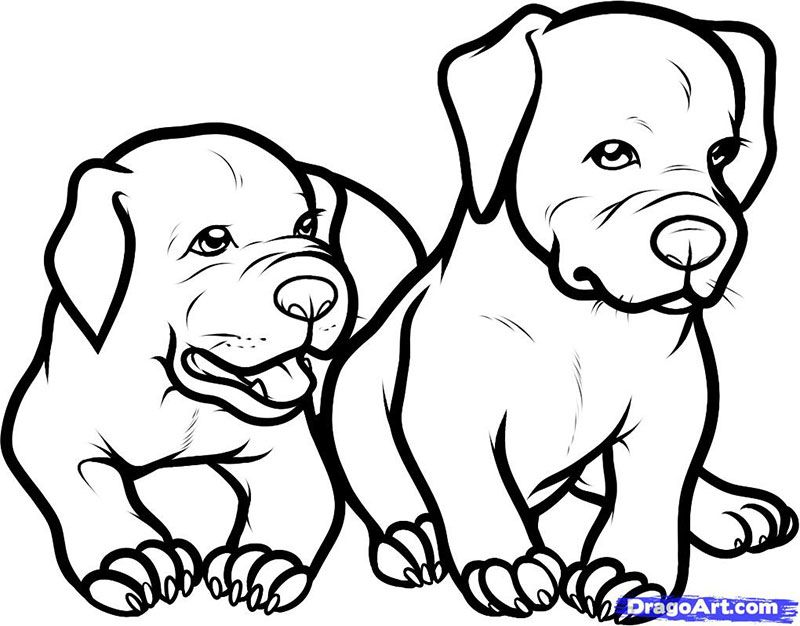 How to draw two puppies of a pit bull terrier with a pencil step by step